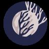 Koral1O